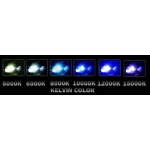 9008 5000K Xenon HID Conversion Kit